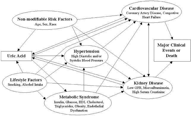 clinical evidence for the influence of uric acid on